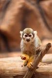 Affe, der auf einem Baum steht Stockfoto