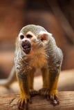 Affe, der auf einem Baum steht Lizenzfreies Stockfoto