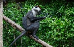 Affe, der auf einem Baumast sitzt Lizenzfreies Stockbild