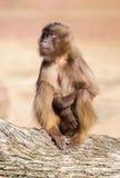 Affe, der auf einem Baumstamm sitzt Stockbilder