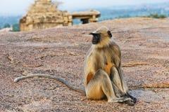 Affe, der auf einem Felsen in Hampi sitzt Lizenzfreies Stockfoto