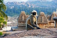 Affe, der auf einem Felsen in Hampi sitzt Indien Stockfotos
