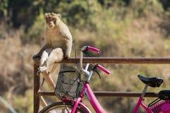 Affe, der auf einem Geländer sitzt Stockfotografie