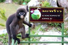 Affe, der auf einem Kokosnussbehälter sitzt Stockfotos