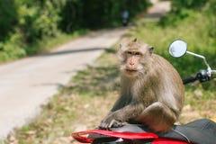 Affe, der auf einem Motorrad sitzt Asiatisch Stockbild
