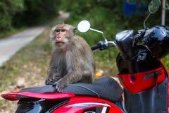 Affe, der auf einem Motorrad sitzt nave Lizenzfreie Stockfotografie
