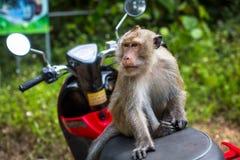 Affe, der auf einem Motorrad sitzt nave Lizenzfreies Stockfoto