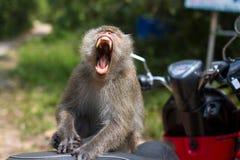 Affe, der auf einem Motorrad sitzt Reise Stockfotografie
