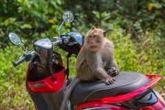 Affe, der auf einem Motorrad sitzt tourismus Stockfotografie