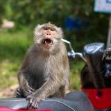 Affe, der auf einem Motorrad, Thailand sitzt Lizenzfreie Stockfotos