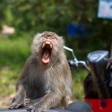 Affe, der auf einem Motorrad, Thailand sitzt Lizenzfreie Stockfotografie