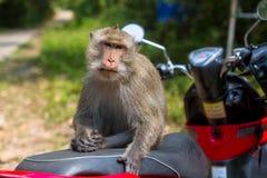 Affe, der auf einem Motorrad, Thailand sitzt Stockfotos