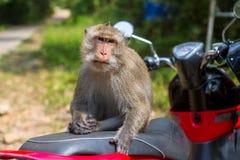 Affe, der auf einem Motorrad, Thailand sitzt nave Stockfotografie