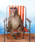 Affe, der auf einem Strandstuhl sich entspannt Lizenzfreie Stockfotografie