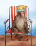 Affe, der auf einen Strandstuhl sich entspannt Stockbild