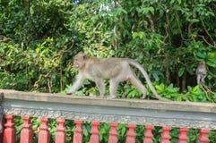 Affe, der auf einen Zaun geht Lizenzfreie Stockfotografie