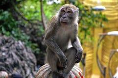 Affe, der auf einer Säule in Kuala Lumpur denkt lizenzfreie stockfotografie