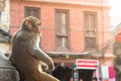 Affe, der auf einer Statue sitzt Stockfotografie
