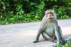 Affe, der auf einer Straße sitzt asien Lizenzfreies Stockfoto