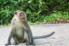 Affe, der auf einer Straße sitzt Reise in Asien Stockbilder
