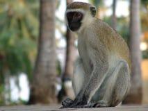 Affe, der auf Esel kenia sitzt Lizenzfreie Stockfotos