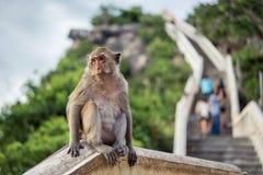 Affe, der auf Gebirgshintergrund sitzt Stockbilder