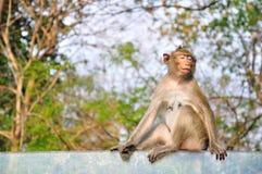 Affe, der auf Glas sitzt Lizenzfreies Stockfoto