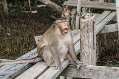 Affe, der auf der hölzernen Plattform sitzt Stockfotografie