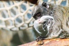 Affe, der auf Holz mit unscharfem Hintergrund sitzt Stockbild