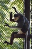 Affe, der auf Klotzholz über Netz schläft Stockfotos