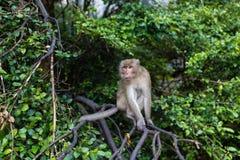 Affe, der auf der Niederlassung des Baums im Freien sitzt Thailand-Tier lizenzfreie stockfotos