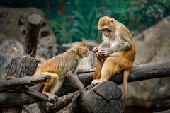 Affe, der auf Niederlassung sitzt Lizenzfreies Stockbild