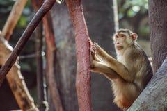 Affe, der auf Niederlassung sitzt Stockfotografie