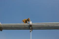 Affe, der auf Ramjula-Brücke, Rishikesh geht Lizenzfreie Stockfotografie