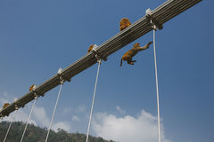 Affe, der auf Ramjula-Brücke, Rishikesh geht Stockbilder