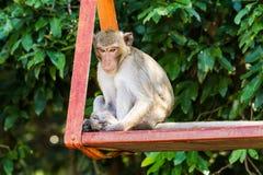 Affe, der auf Schwingen sitzt Lizenzfreie Stockfotos