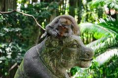 Affe, der auf der Statue im Affewald in Bali, Indonesien liegt stockbild