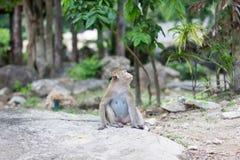 Affe, der auf Straße sitzt Lizenzfreies Stockfoto