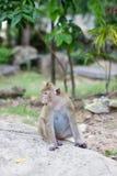 Affe, der auf Straße sitzt Lizenzfreies Stockbild