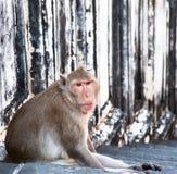 Affe, der auf Treppenhaus sitzt. Lizenzfreie Stockfotos
