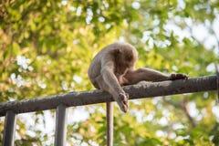 Affe, der auf Unschärfegrün-Naturhintergrund sitzt Lizenzfreie Stockbilder