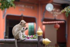 Affe, der auf Unschärfehintergrund sitzt Lizenzfreie Stockfotos