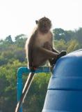Affe, der auf Wasserbehälter sitzt Stockbilder