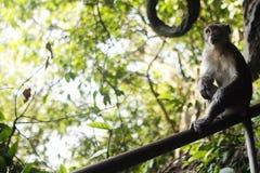 Affe, der auf Zaun denkt Lizenzfreies Stockfoto