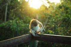 Affe, der auf Zaun im Sonnenlicht sitzt Lizenzfreie Stockbilder
