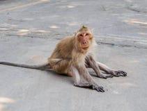 Affe, der aus den Zementgrund sitzt Lizenzfreies Stockbild