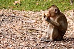 Affe, der Banane isst Stockfoto