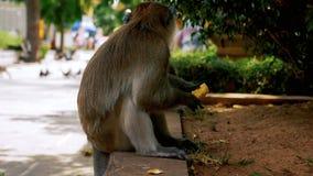 Affe, der Banane isst stock video