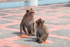 Affe, der Bodenfußweg spielt Stockbild