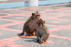 Affe, der Bodenfußweg spielt Lizenzfreies Stockfoto